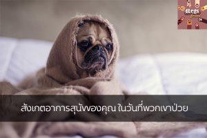 สังเกตอาการสุนัขของคุณ ในวันที่พวกเขาป่วย สัตว์น่ารัก สัตว์เลี้ยงแปลก ทริคการเลี้ยงสัตว์ อาการสุนัขป่วย