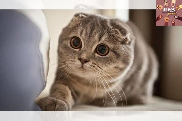 จัดอันดับแมวพันธุ์ที่นิยมเลี้ยงกัน สัตว์น่ารัก สัตว์เลี้ยงแปลก ทริคการเลี้ยงสัตว์ อันดับแมวพันธุ์น่าเลี้ยง