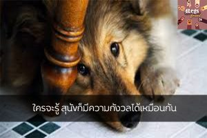 ใครจะรู้ สุนัขก็มีความกังวลได้เหมือนกัน สัตว์น่ารัก สัตว์เลี้ยงแปลก ทริคการเลี้ยงสัตว์ ควรรู้เมื่อสุนัขกังวล