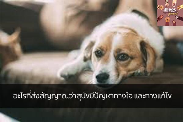 อะไรที่ส่งสัญญาณว่าสุนัขมีปัญหาทางใจ และทางแก้ไข สัตว์น่ารัก สัตว์เลี้ยงแปลก ทริคการเลี้ยงสัตว์ ควรรู้เมื่อสุนัขกังวล