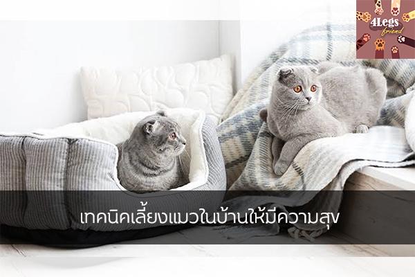 เทคนิคเลี้ยงแมวในบ้านให้มีความสุข สัตว์น่ารัก สัตว์เลี้ยงแปลก ทริคการเลี้ยงสัตว์ เทคนิคเลี้ยงแมวในบ้าน