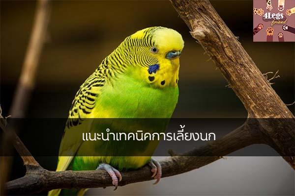 แนะนำเทคนิคการเลี้ยงนก สัตว์น่ารัก สัตว์เลี้ยงแปลก ทริคการเลี้ยงสัตว์ เทคนิคการเลี้ยงนก