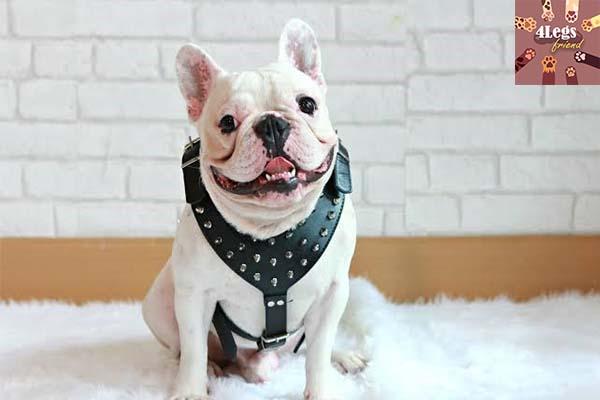 เคล็ดลับการฝึกสุนัขให้เชื่อง สัตว์น่ารัก สัตว์เลี้ยงแปลก ทริคการเลี้ยงสัตว์ เคล็ดลับการฝึกสุนัขให้เชื่อง