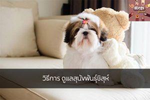 วิธีการ ดูแลสุนัขพันธุ์ชิสุห์ สัตว์น่ารัก สัตว์เลี้ยงแปลก ทริคการเลี้ยงสัตว์ วิธีดูแลสุนัขพันธุ์ชิสุห์