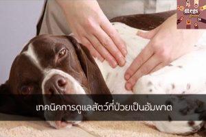 เทคนิคการดูแลสัตว์ที่ป่วยเป็นอัมพาต สัตว์น่ารัก สัตว์เลี้ยงแปลก ทริคการเลี้ยงสัตว์ การดูแลสัตว์ที่ป่วยเป็นอัมพาต