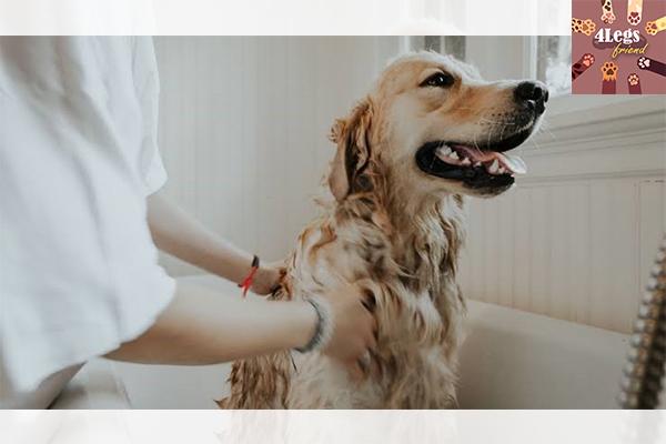 โรคร้ายในสัตว์เลี้ยงช่วงหน้าฝน สัตว์น่ารัก สัตว์เลี้ยงแปลก ทริคการเลี้ยงสัตว์ โรคในสัตว์เลี้ยงช่วงหน้าฝน
