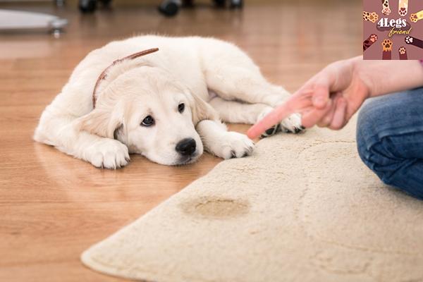 การฝึกสุนัขให้ขับถ่ายเป็นที่ เรื่องง่าย ๆ ที่ใครก็ทำได้ สัตว์น่ารัก สัตว์เลี้ยงแปลก ทริคการเลี้ยงสัตว์ เทคนิคฝึกสุนัขให้ขับถ่ายเป็นที่