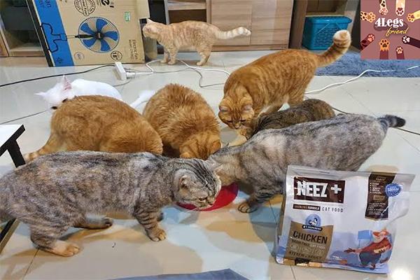 ให้อาหารแมวแบบไหนดี ? สัตว์น่ารัก สัตว์เลี้ยงแปลก ทริคการเลี้ยงสัตว์ ให้อาหารแมวแบบไหนดี
