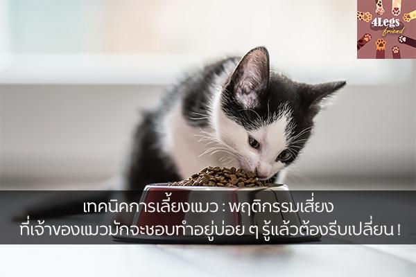 เทคนิคการเลี้ยงแมว : พฤติกรรมเสี่ยง ที่เจ้าของแมวมักจะชอบทำอยู่บ่อย ๆ รู้แล้วต้องรีบเปลี่ยน ! สัตว์น่ารัก สัตว์เลี้ยงแปลก ทริคการเลี้ยงสัตว์ เทคนิคการเลี้ยงแมว พฤติกรรมเสี่ยงที่ควรเปลี่ยน