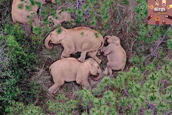 5 สัตว์ที่นอนน้อยที่สุด ตื่นตัวทั้งวัน สัตว์น่ารัก สัตว์เลี้ยงแปลก ทริคการเลี้ยงสัตว์ สัตว์ที่นอนน้อยที่สุด